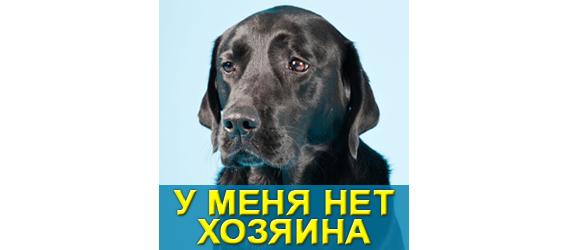 """Мой Друг - МБФ """"ЦСПМ"""""""